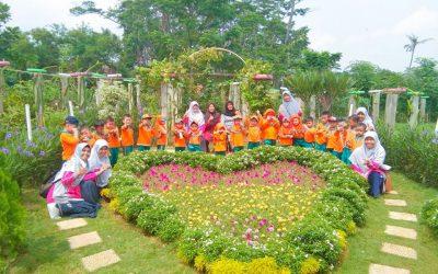 Field Trip Ke Kebun Buah Naga di Sindang Jawa